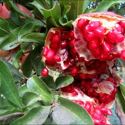 حس خوب گذری در نجف آباد / باغ انار / صالح آباد / منطقه پنج